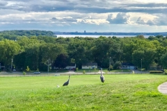 Cranes on the hill