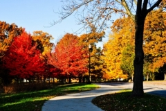 Fall on the walk by Joleen